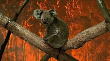 Cháy rừng ở Úc, rao bán đất chùa và những tin nổi bật khác