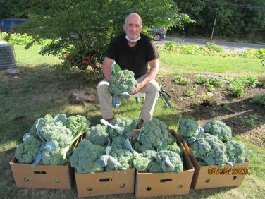 Người đàn ông trồng rau trên dải phân cách, rồi thu hoạch tặng cho người nghèo