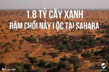 """1,8 tỷ cây xanh đang đâm chồi nảy lộc tại """"vùng đất chết"""" Sahara"""