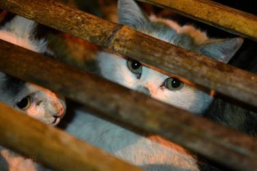 Thọ Bồ tát giới tại gia nuôi chó mèo có tội không?