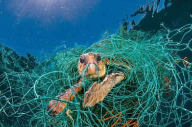 Chúng ta đã dùng nhựa để hủy hoại tự nhiên như thế nào?