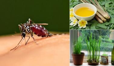 5 cách đuổi muỗi cực kỳ hiệu quả