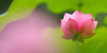 Làm thế nào để phân biệt chánh tà giữa rừng pháp môn Phật giáo?