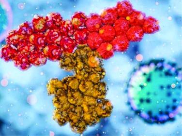 Phát hiện kháng thể mới cực mạnh chống SARS-CoV-2
