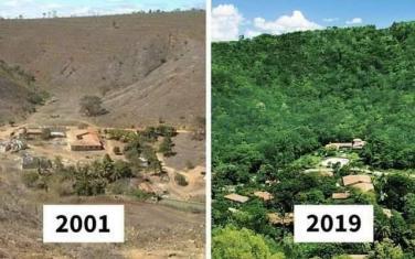 Nhân quả trồng rừng